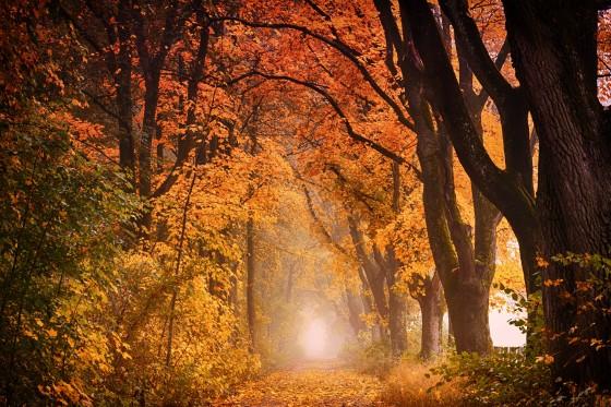 tree-3110117